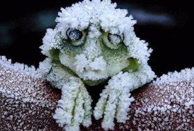 frozenfrog