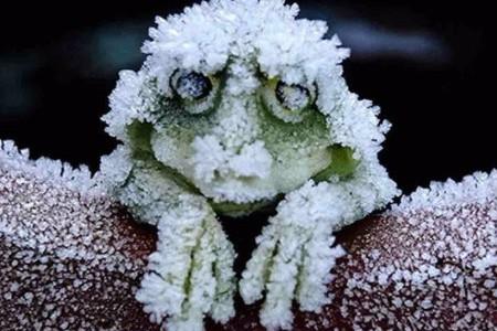 frozenfrog